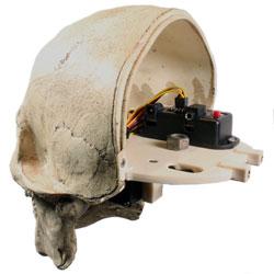 skull-inside.jpg